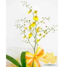 Orquidea Chuva de Ouro