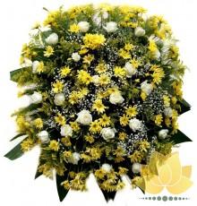 Coroa Amarela e Branca