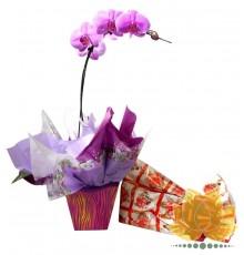 Orquídea e Bombom